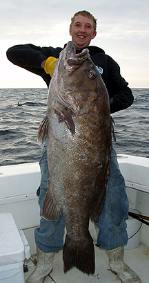 World Record Sea Bass Grouper large sea bass