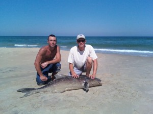 surf fishing 101 contined virginia beach charter boats