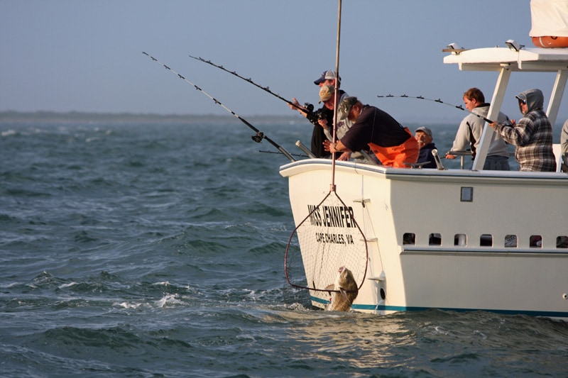 Virginia inshore fishing report virginia beach charter for Fishing report chesapeake bay