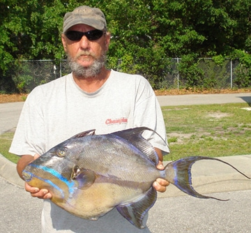 North carolina state record queen trigger fish virginia for Nc saltwater fish