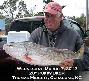 Ocracoke drum virginia beach fishing for Ocracoke fishing report