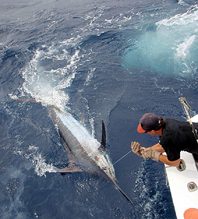 Outer banks nc fishing report virginia beach charter for Nc fishing report