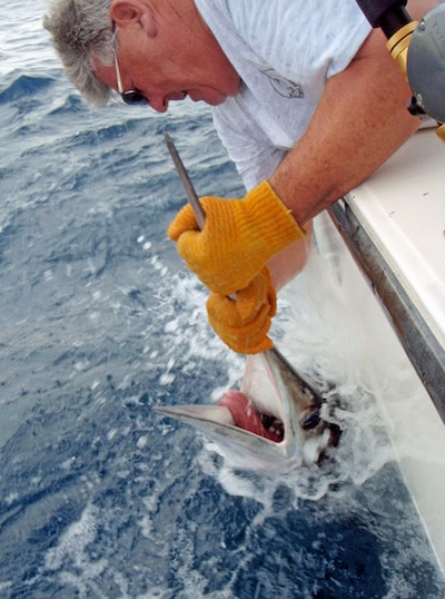 Olympus digital camera virginia beach charter boats and for Lynnhaven inlet fishing report