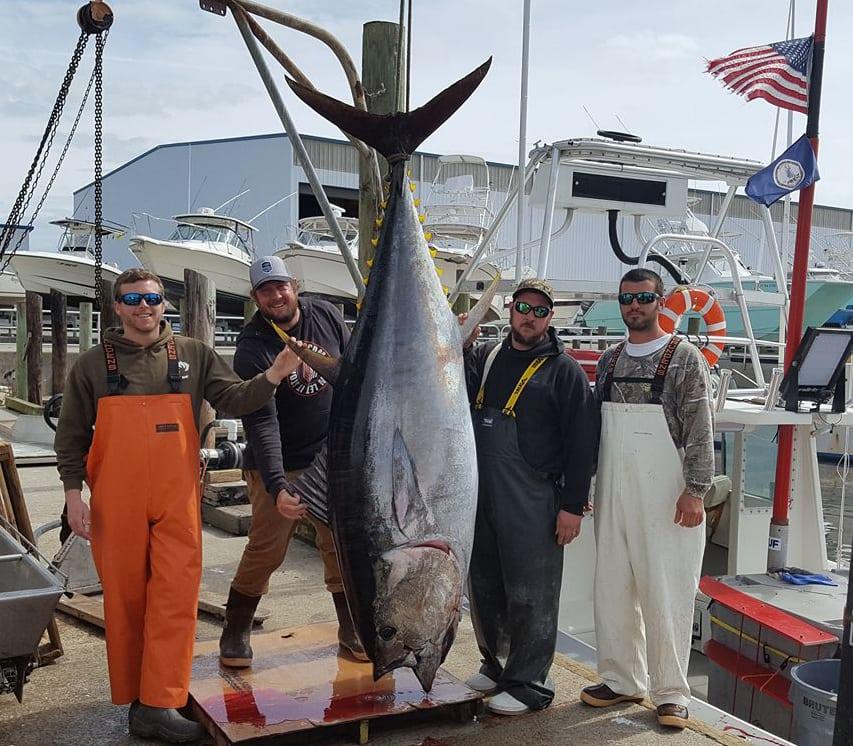 Tuna virginia beach fishing for Virginia saltwater fishing